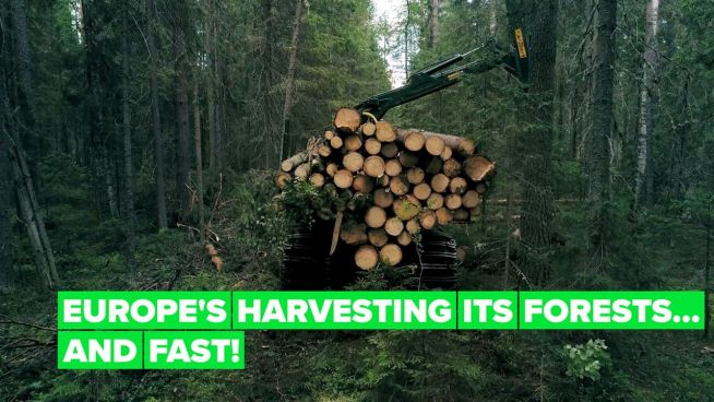 Europe's cutting down its forests at an alarming rate