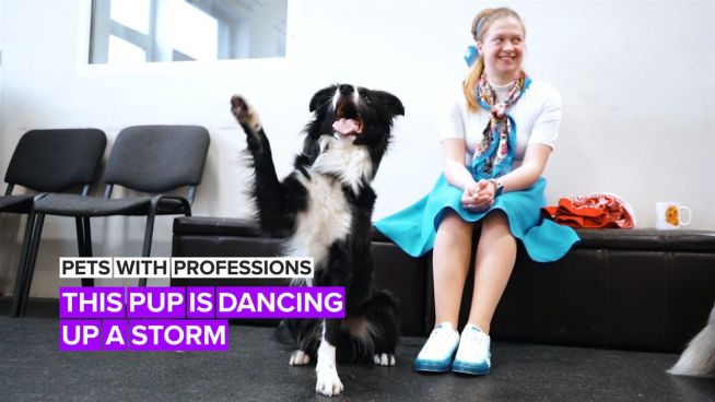 Pets with Professions: Nobody puts this dancing dog in a corner!
