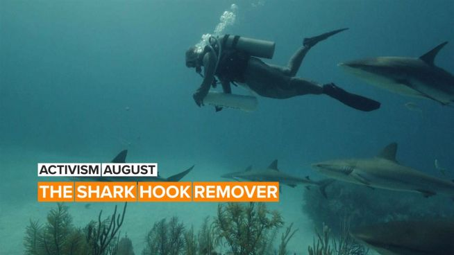 Activism August: Cristina reaches into sharks' mouths… to save them