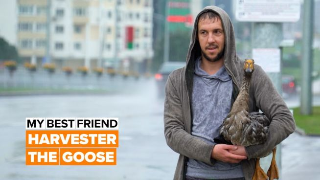 How a goose became his best friend