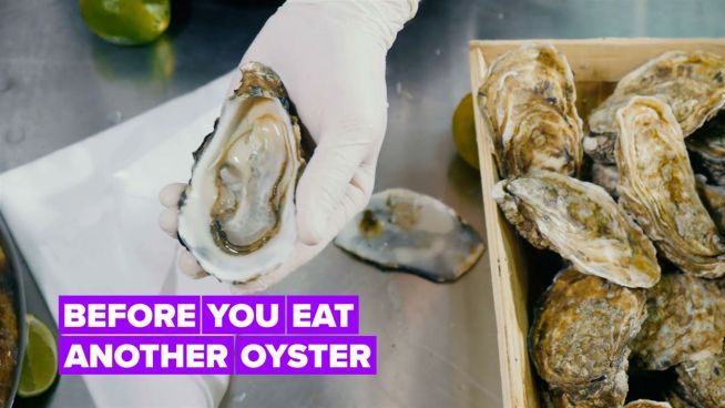 Here's why you should always check where your oysters are from…