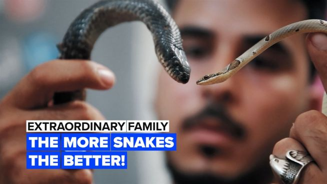 Extraordinary Family: Would you want a neighbor with this many snakes?
