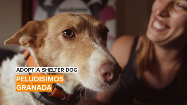 Adopt a Shelter Dog: What's better than a furry best friend for life?
